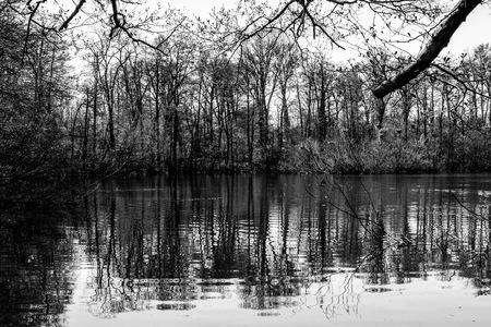 bog: The peat bog, wildlife park, Novara