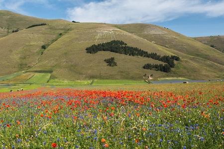 castelluccio: Castelluccio, Pian Grande, Umbria.