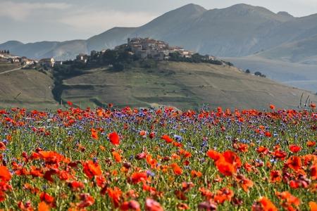 umbria: Castelluccio, Pian Grande, Umbria.