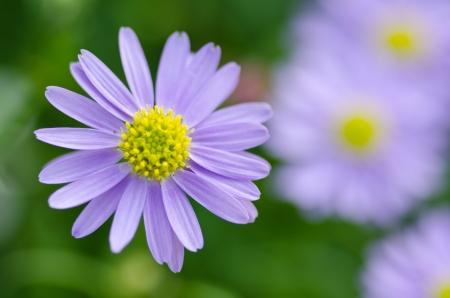 small purple flower: Small Purple Flower