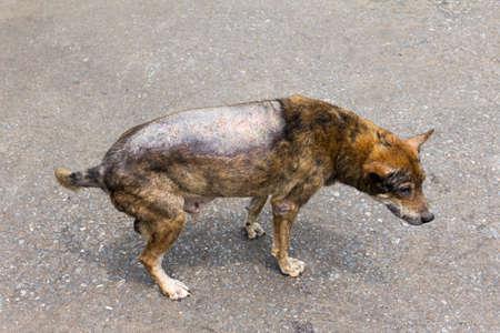 diseased: Dog sick