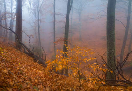 misty forest: Leaf fall in a misty forest