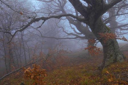 misty forest: Misty forest guard Stock Photo