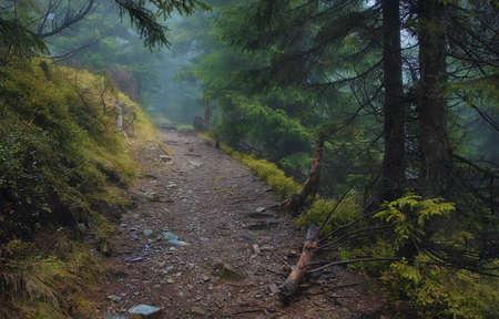 hiking: Village road in a misty forest in Carpathians
