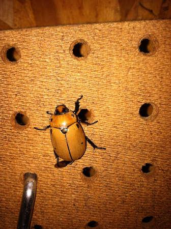 beetle Stok Fotoğraf