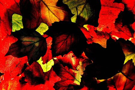 autumn colour: Back lit autumn fall leaves. Background texture. colour effects applied for strong reds and blacks. Stock Photo