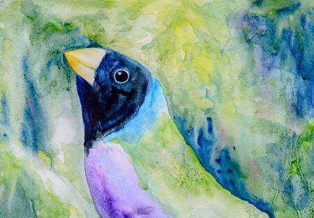 finch: Original watercolour portrait painting of a black head Gouldian Finch