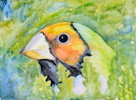 finch: Original watercolour portrait painting of an orange head Gouldian finch.