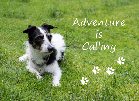 jack russell terrier: Inspirational quote with cute Jack Russell terrier cross dog lying down looking into the distance at something. Adventure is calling.