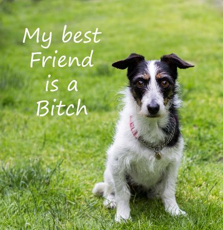 puta: Cita con el perro lindo cruz del terrier Jack Russell. El texto lee Mi mejor amigo es una perra. Foto de archivo