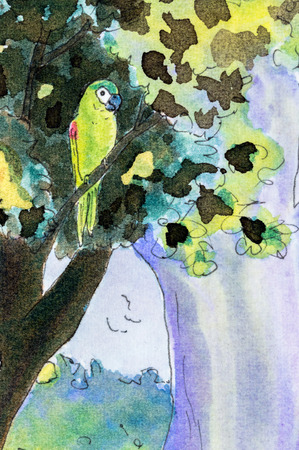 shouldered: Original watercolor painting of one Hahns macaw parrot perching in a tree.