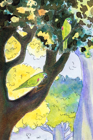 shouldered: Original watercolor painting of two Hahns macaw parrots perching in a tree. Stock Photo