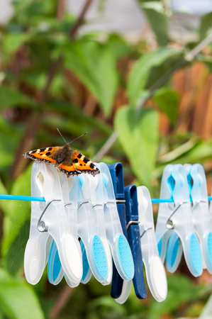tortoiseshell: Small Tortoiseshell butterfly (Aglais urticae) resting on clothespins on a washing line.