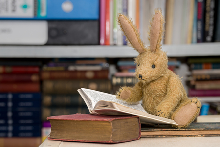 Vintage toy bunny rabbit reading a book in front of a blurred background of bookshelves. Childrens studying, learning, reading concept.