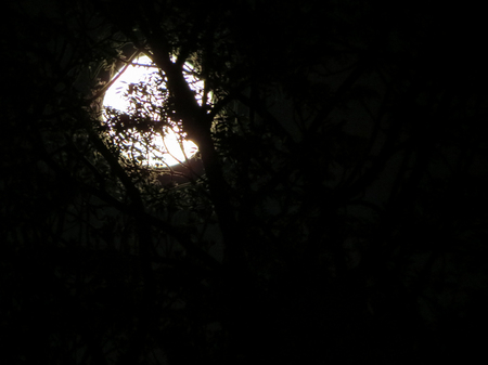 Spooky night scene, very dark sky, branches and foliage, silhouetted against a white bright deliberately over exposed full moon. Artistic effects.