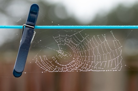 Spiders web covered in beads of dew on a washing line with blue plastic clothes peg. Bokeh background, outside on a dull day.