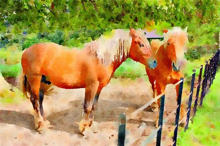 Watercolour painting of two pamomino horses standing in a field in summer. Stock Photo