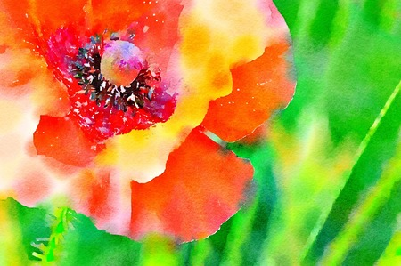 Watercolour painting of a red Flanders Poppy in a field. Close up detail on a bright sunny day. Vibrant colours.