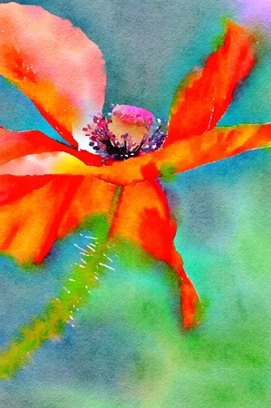 Watercolor painting of a single red Flanders Poppy. Close up detail on a bright sunny day. Vibrant colours. Vertical.