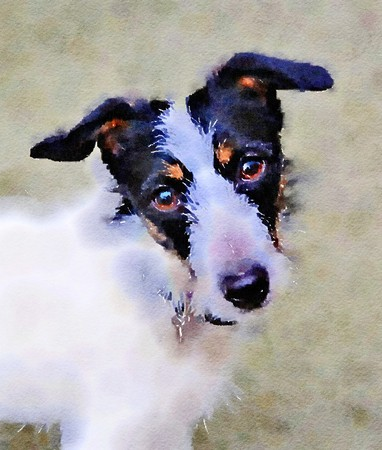 Watercolour portrait painting of a Jack Russell Terrier dog.
