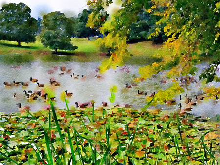 Watercolour landscape painting of Canada geese on a lake. Impressionistic English country park landscape.