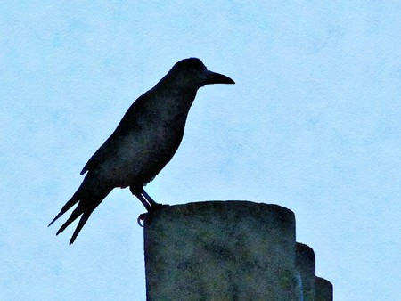 Watercolour painting of a rook on a chimney pot in silhouette. Pale blue sky background.