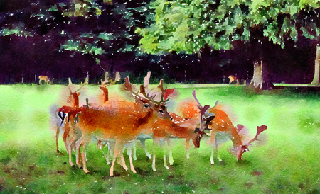 Watercolour painting of a small group of Fallow deer grazing in the English countryside on a country estate. Stock Photo