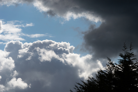 Billowing clouds with blue sky and tree silhouette. Moody stormy weather with both dark grey clouds and contrasting brightly lit white clouds.