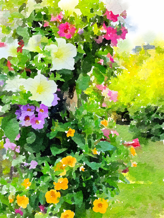 Watercolour painting of hanging basket flowers in an English cottage garden.