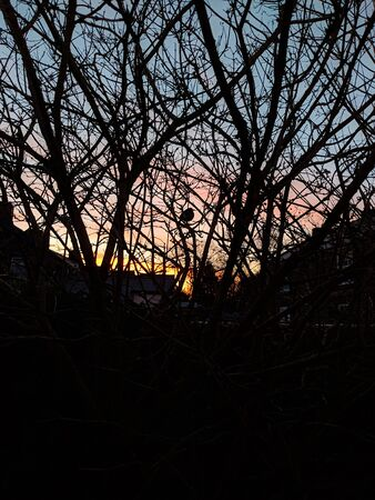 Silhouette of bare branches against an evening sky at sunset. Buildings in background and small blackbird perched in branches. Vertical.