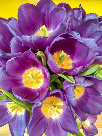 Bunch of brightly coloured flowers viewed from above. Beautiful purple tulips close up. Vertical. 免版税图像