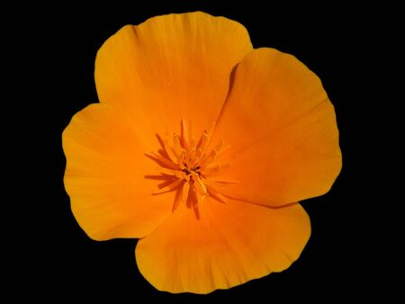 orange flower Imagens
