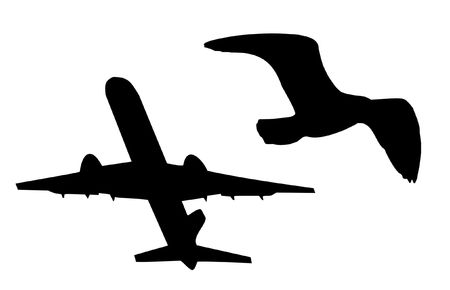 outlines of an airplane and a bird in flight (photo - NOT vector, but should be easy to convert) photo
