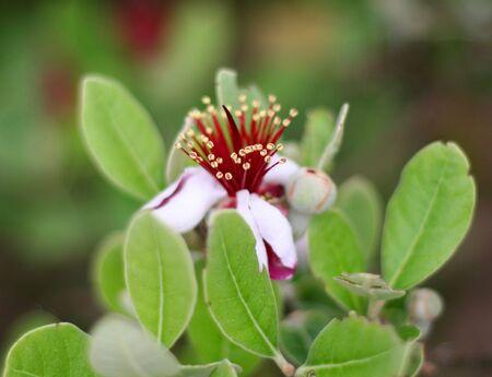 a pretty flower with narrow DOF