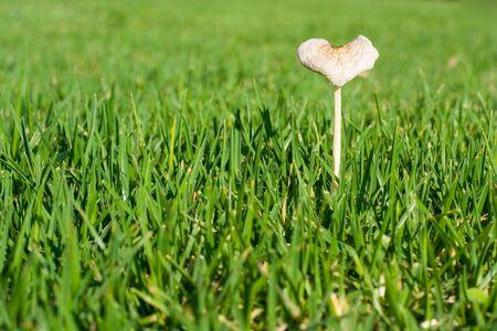 a mushroom in green grass Imagens