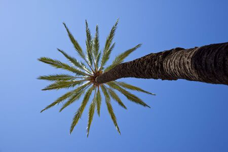 palm tree Stock Photo - 5041310