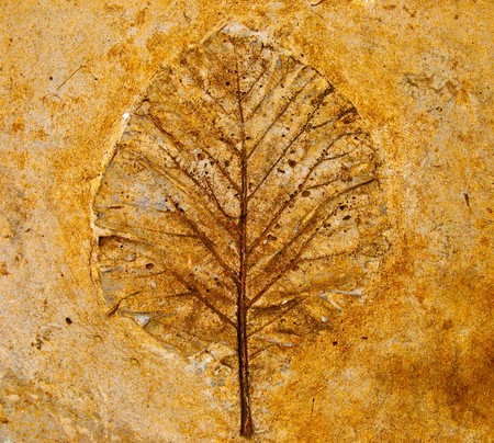fossil: The Imprint leaf on cement floor