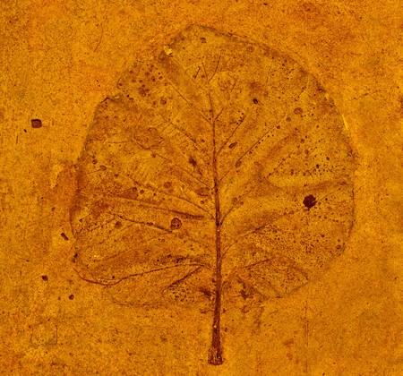 The Imprint leaf on cement floor photo