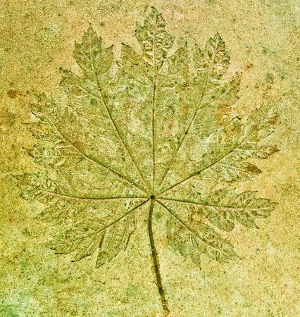 TheThe Imprint of grape leaf on cement floor background photo