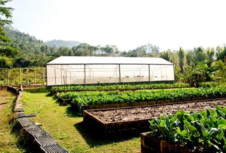 plant nursery: The Green house