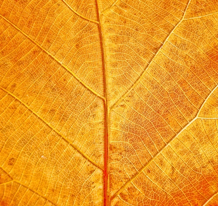 The Leaf texture photo
