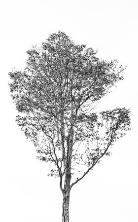 bomen zwart wit: De Takken van de boom
