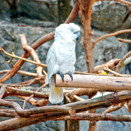 The Cockatoo being sleep photo