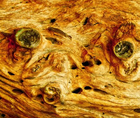 The Wood texture photo