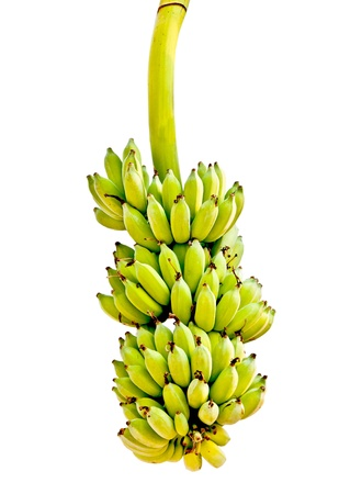 The Banana isolated on white background photo