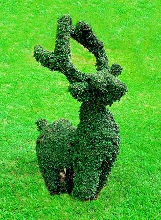 The Bending tree of reindeer photo
