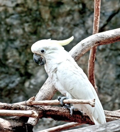 The Beautiful of cockatoo photo