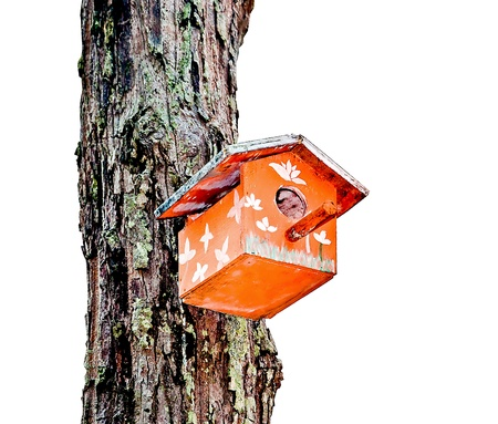 abode: The Wooden of birdhouse on tree