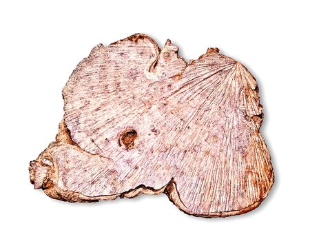 The Old texture of  wood stump isolated on white background photo
