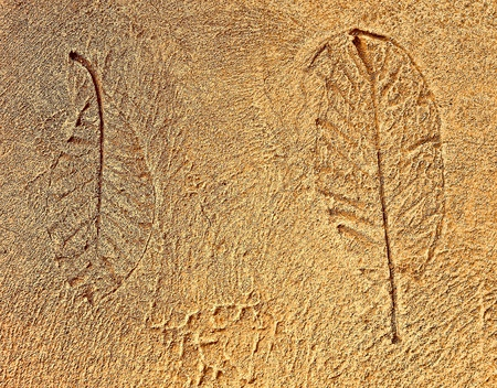 The Imprint leaf on cement floor background Stock Photo - 12027949